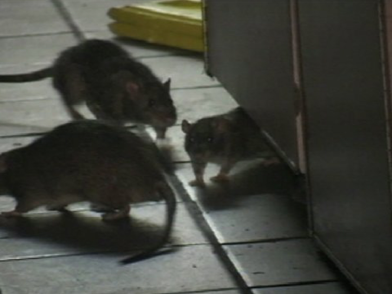 Amazing Mice In The Kitchen Festooning - Interior Design Ideas ...
