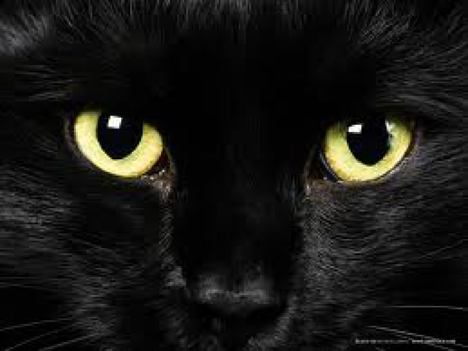 Why Do Witches Like Black Cats