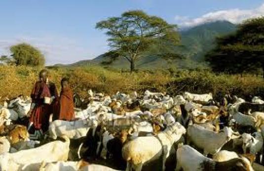 goat herders 3