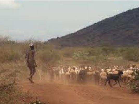 Kenyan goat Herder 2a
