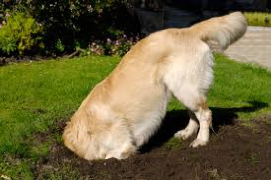 dog digging 3