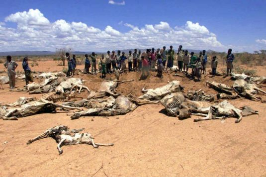 ethiopia_drought_cows_2012_8_21