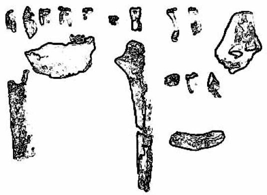 Ardipithecus Kadabba bones