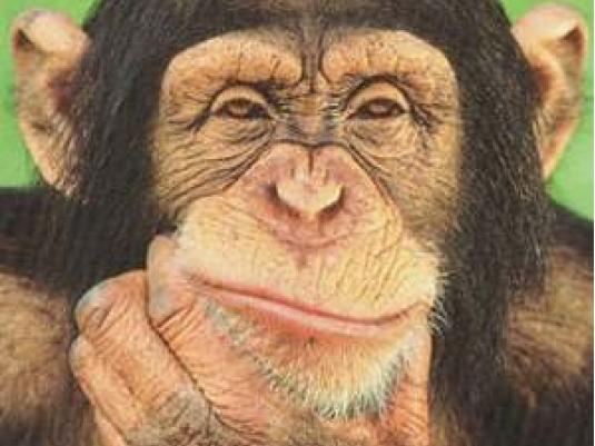 chimpanzee 1a