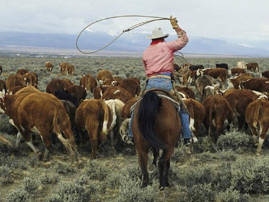rancher 1a