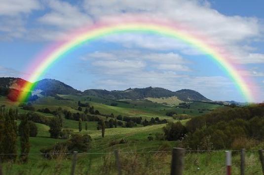 welfare rainbow 2