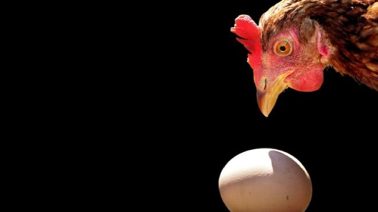chicken and the egg 1