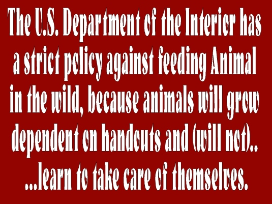 don't feed the animals policy 1
