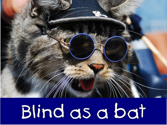 blind as a bat 1a