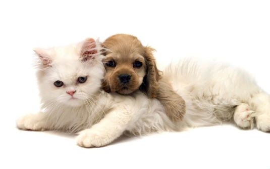 dogs and cats 1