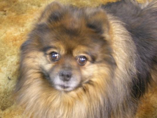 Molly - 1998 - 2011