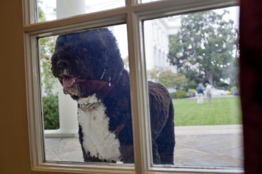 Obama's dog 1