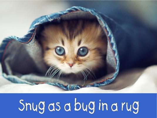 snug as a bug in a rug 1a