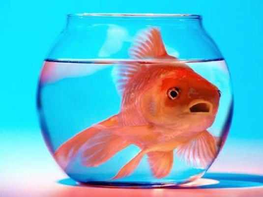 kismet fish 1