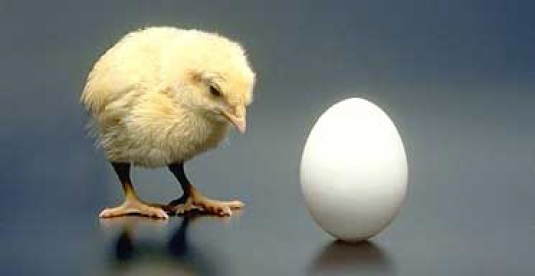 the chicken or the egg 1
