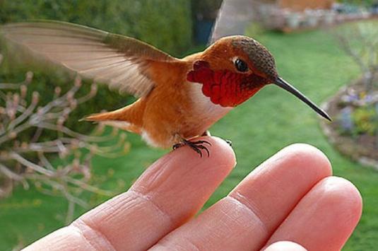 the hummingbird 1