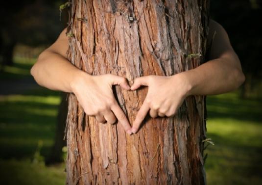 tree hugger 1
