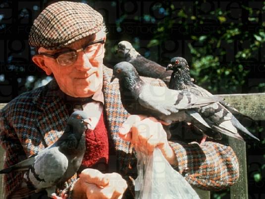 feeding pigeons 1a