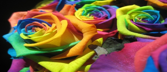 psychedelic roses 2