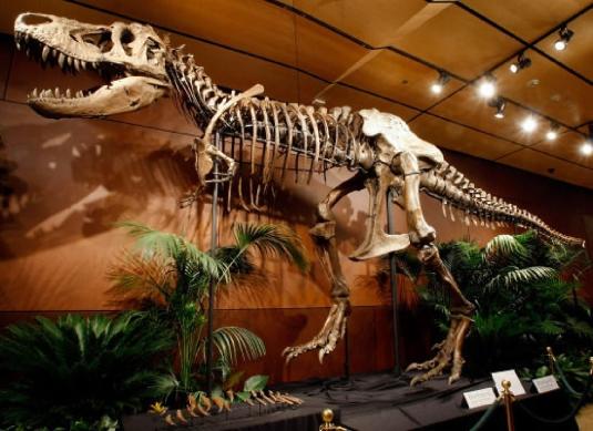 T Rex bones 2