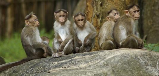 five monkeys 2
