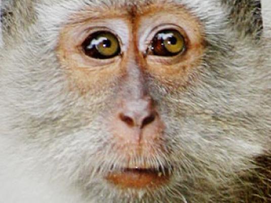 monkey business 2  - frightened mo