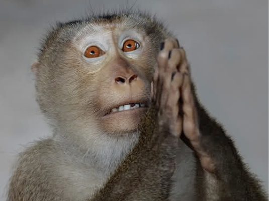 praying monkey - monkey busines 2