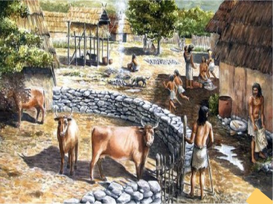 Neolithic - domesticating anima 2a