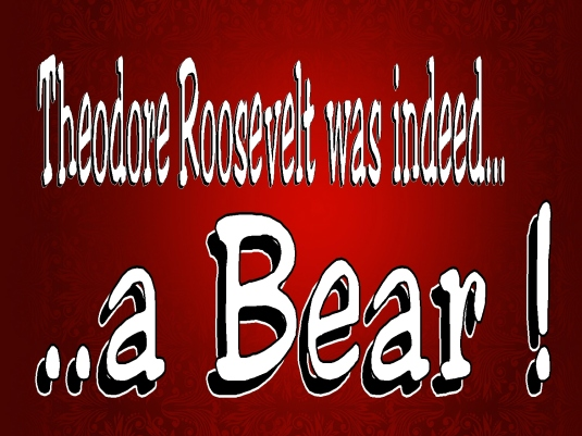 a bear - graphic 1a