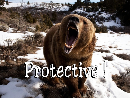 grizzly - protective 1a