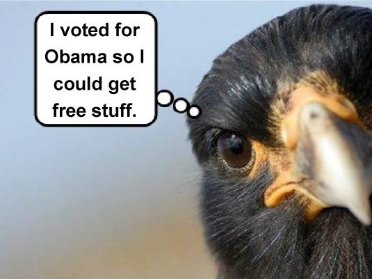 free stuff - birdbrain 1a