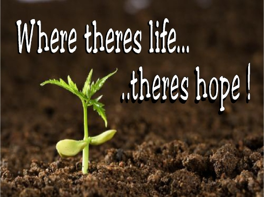 where there is life 1a