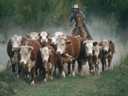 till the cows come home - graph