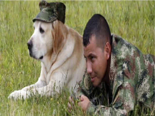 man and his dog - graphic 2a