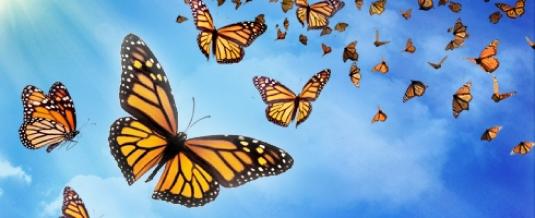 racist butterflies 2
