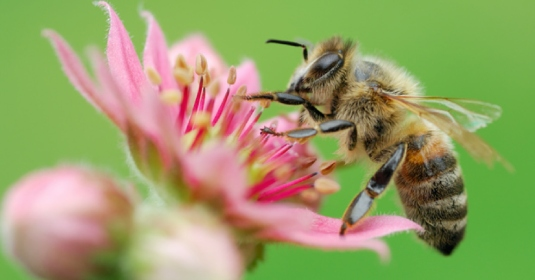 pollinating a flower 1