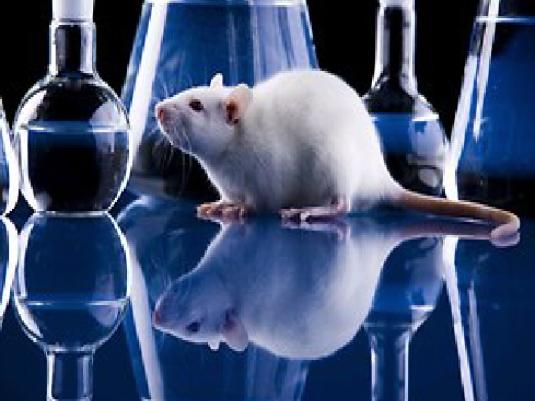lab rat 2a