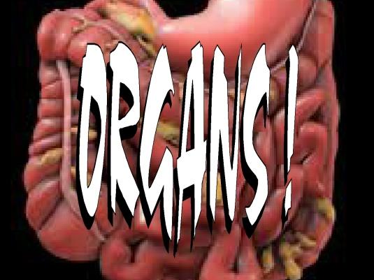 organs 2a