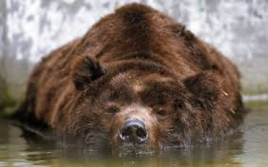 poking the bear 2