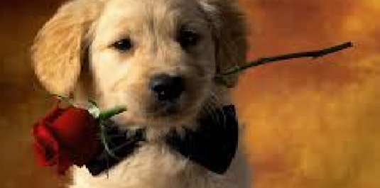 puppy with a rose 2