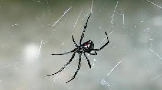 spider - phobic 1