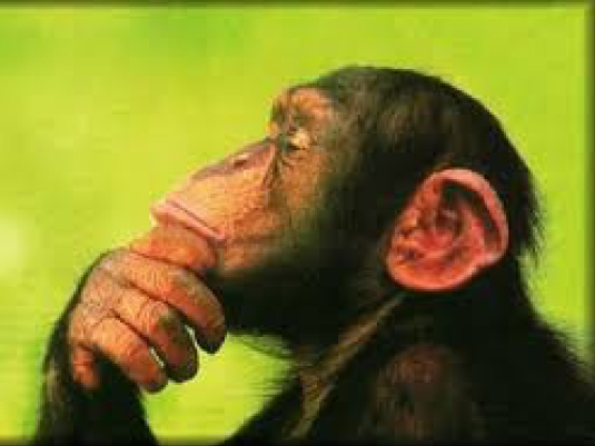 chimpanzee green 1a