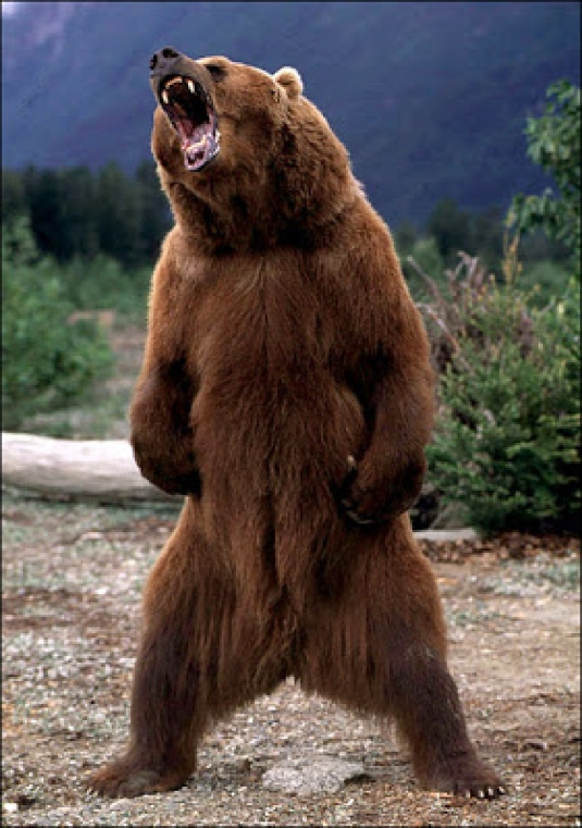 America is a bear