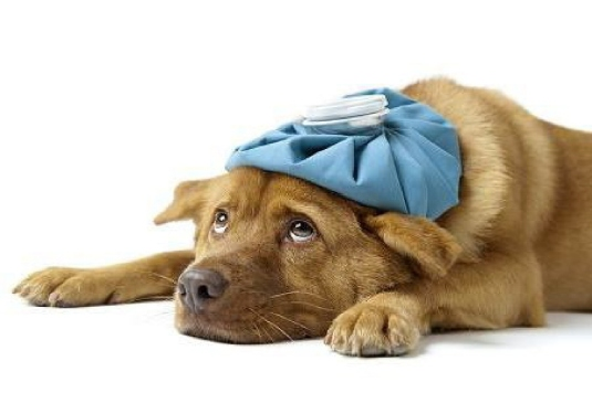 sick dog 2